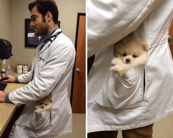 Great Day To Be A Cat Lady: Meet Instagram's Hottest Veterinarian