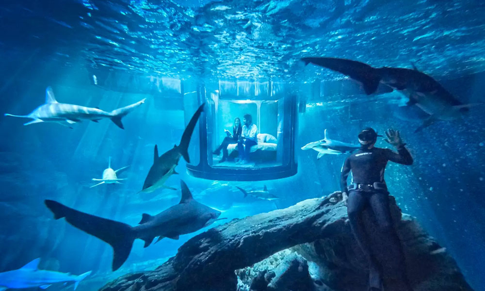 Sleep With The Fishes (And Sharks!) In An Underwater Airbnb
