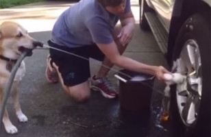 This Dog Helps His Person With Chores Around The House