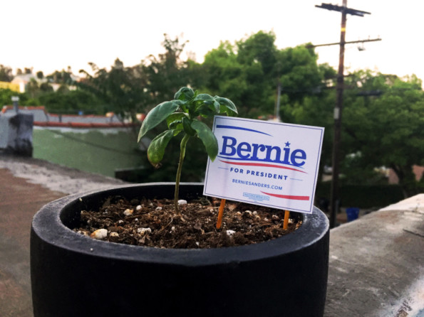 Make These DIY Tiny Political Yard Signs For Your House Plants