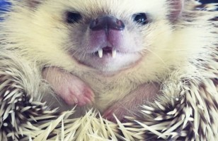 Vampire Hedgehog & More Incredible Links