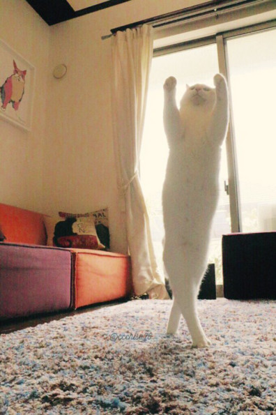 Wow Watching Ballet Cat Dance Is Truly Inspiring, You Guys