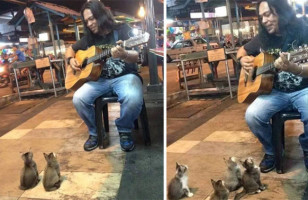 You Gotta Watch These Kittens Watching A Street Performer