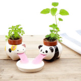Cute Self-Watering Plants