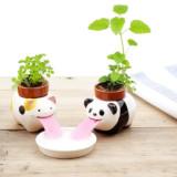 Cute Self-Watering Plants
