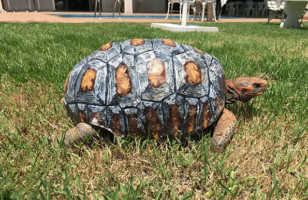 Freddy The Tortoise Gets The First Ever 3D Printed Shell