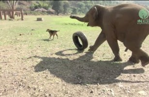 Baby Elephants Playing Is Basically The Epitome Of Cute