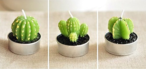 cactus-candles-3