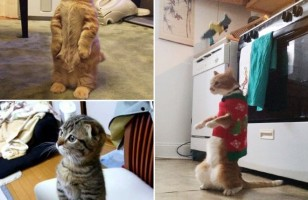 Cats Standing Like Humans & More Incredible Links