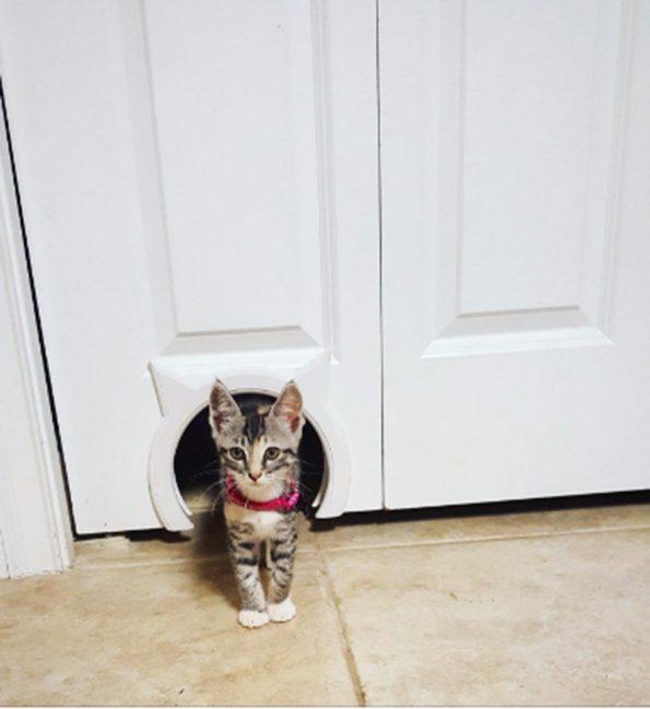 kitty-pass-cat-door-3