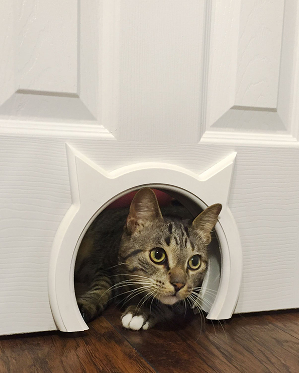 Your Doors And Your Cats Both Desperately Need The Kitty Pass