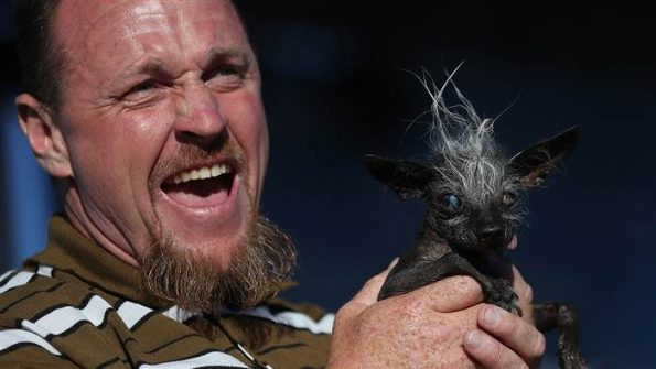 Meet The New World S Ugliest Dog Sweepee Rambo