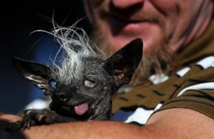Meet The New World's Ugliest Dog, SweePee Rambo