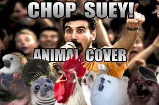 Animals Performing Chop Suey Because Why In The F Not?