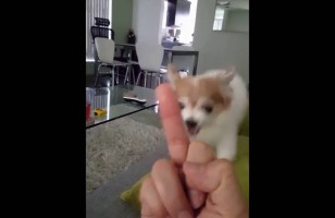 This Dog Hates Middle Fingers So Much, It's Hilarious