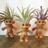Plantrolls