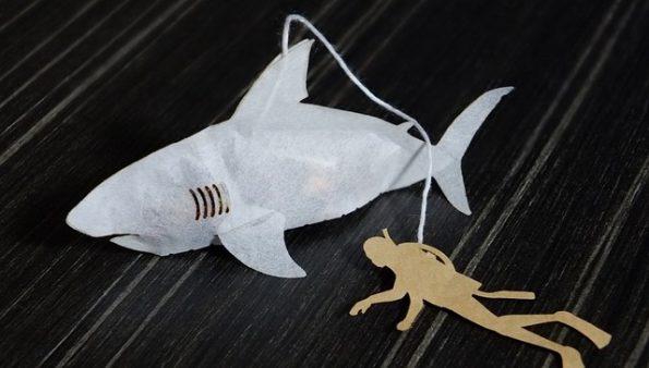 shark-tea-bags-3