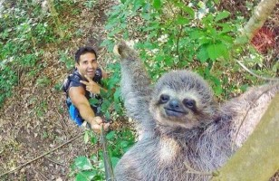 The Cutest Sloth Selfie Ever & More Incredible Links