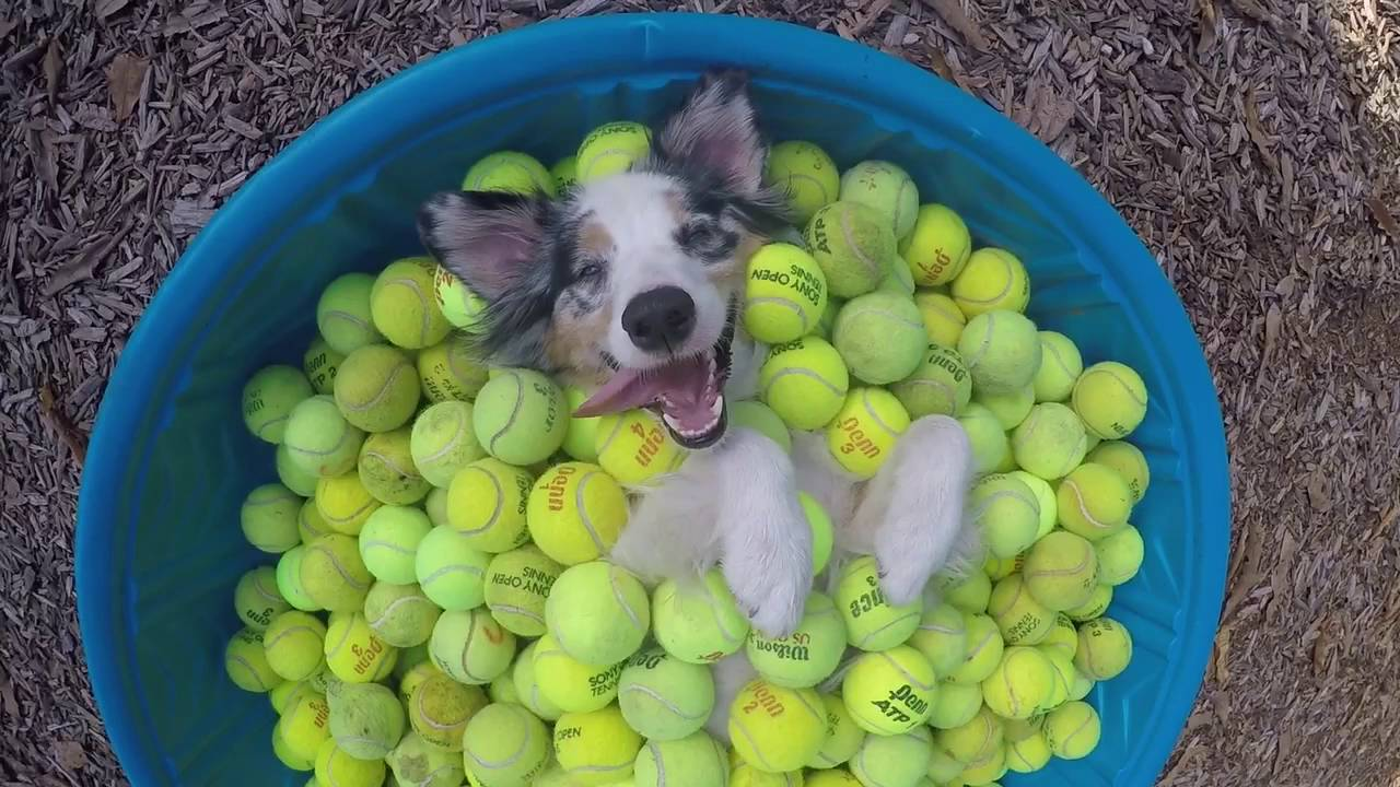 A Dog In A Kiddie Pool Filled With Tennis Balls Is Pure Bliss