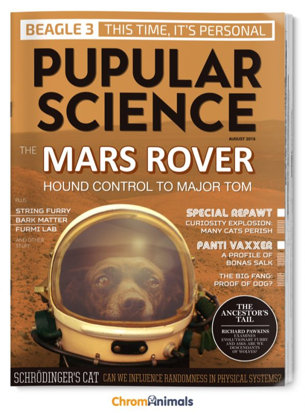 dog-magazines-2