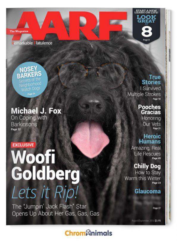 dog-magazines-6
