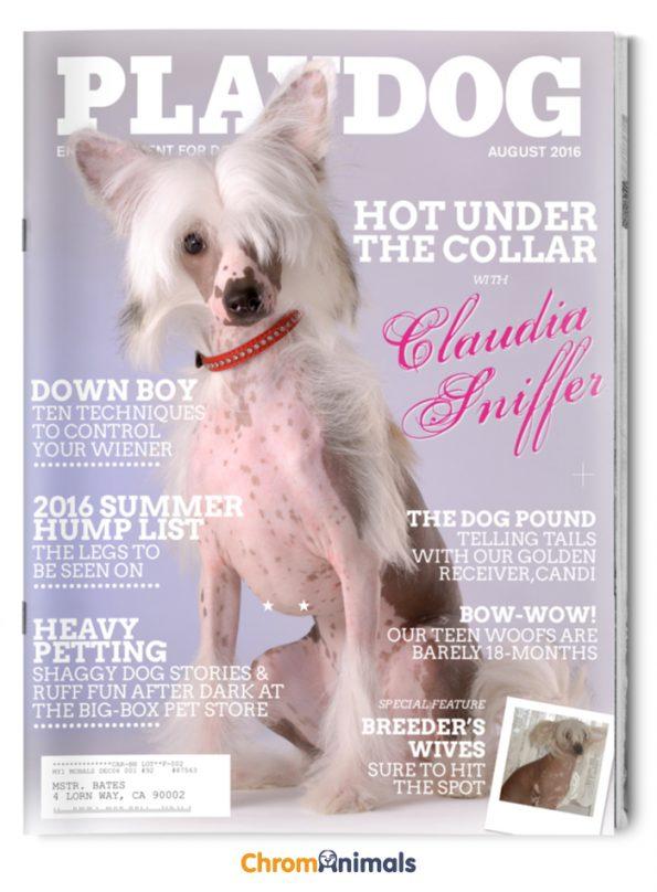 dog-magazines-7