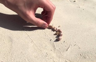 Watch As A Man Helps A Picky Hermit Crab Find His New Shell