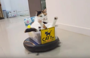Just A Cat In A Plastic Container Riding A Roomba, No Big Deal*