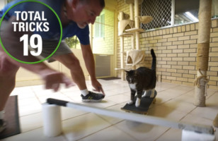 The World Record For Most Tricks Performed By A Cat In 1 Minute