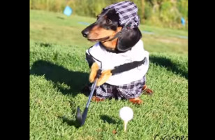 Nothing To See Here, Folks! Just A Couple Dogs Playing Golf