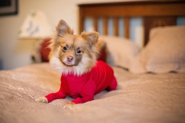 leotard-for-dogs-2