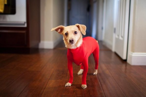 leotard-for-dogs-4