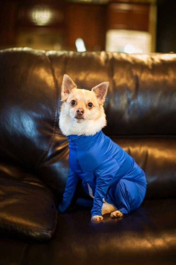 leotard-for-dogs-9