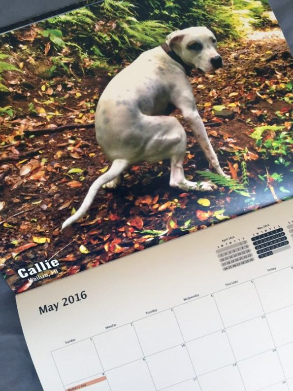 pooping-dogs-calendar-2