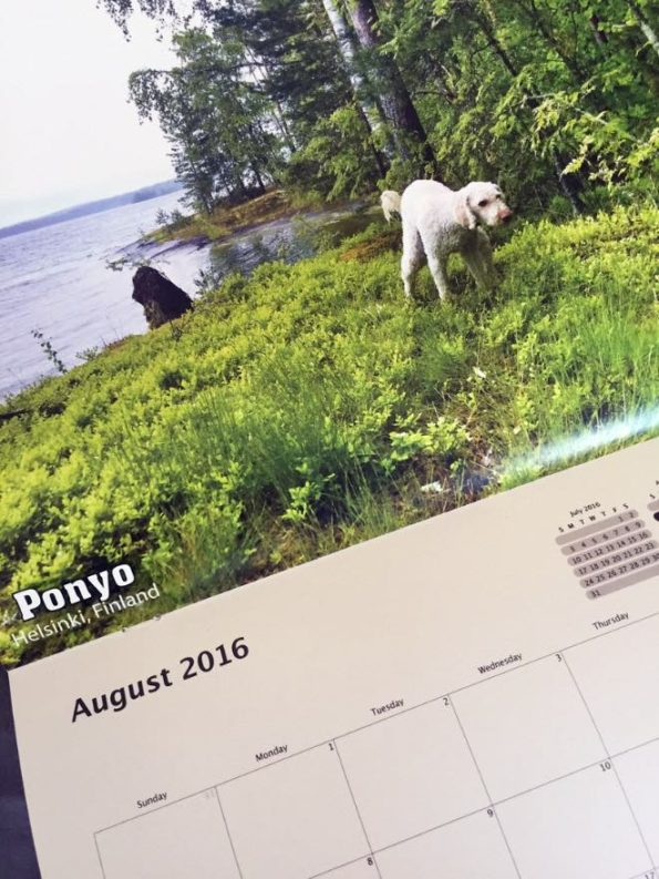 pooping-dogs-calendar-5