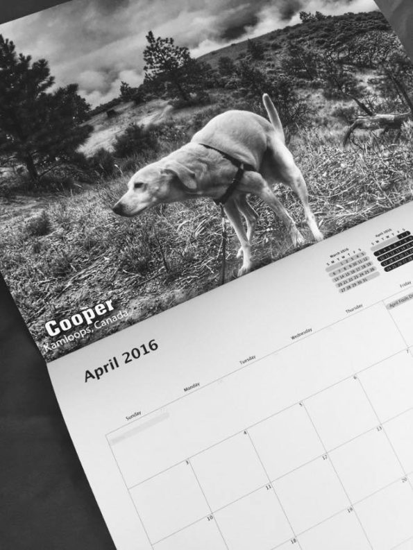 pooping-dogs-calendar-6