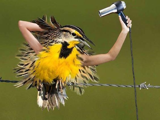 Birds With Human Arms & More Incredible Links