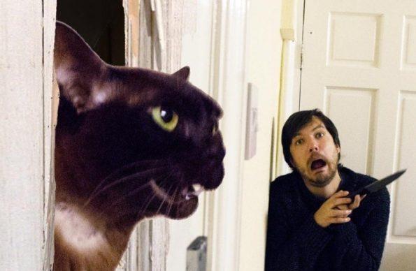 moviecats-movie-cats-5