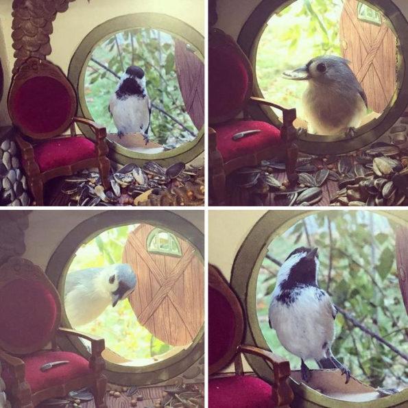 tiny-bird-friends-homes-jada-fitch-3