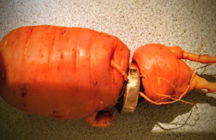 An 81-Year-Old Man Finally Finds His Wedding Ring… On A Carrot!