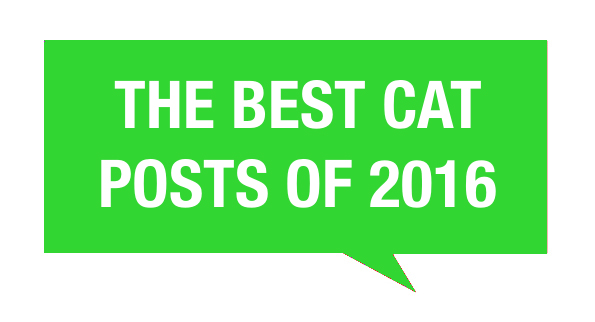 The Best Cat Posts Of 2016