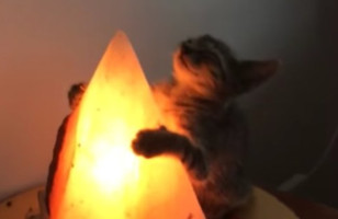 This Cat Hugging A Salt Lamp Is So Precious, It Hurts