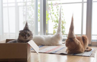 Cats Wearing Hats Made Out Of Their Own Fur. That Is All.