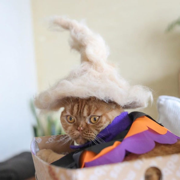 cats-wearing-cat-hats-10