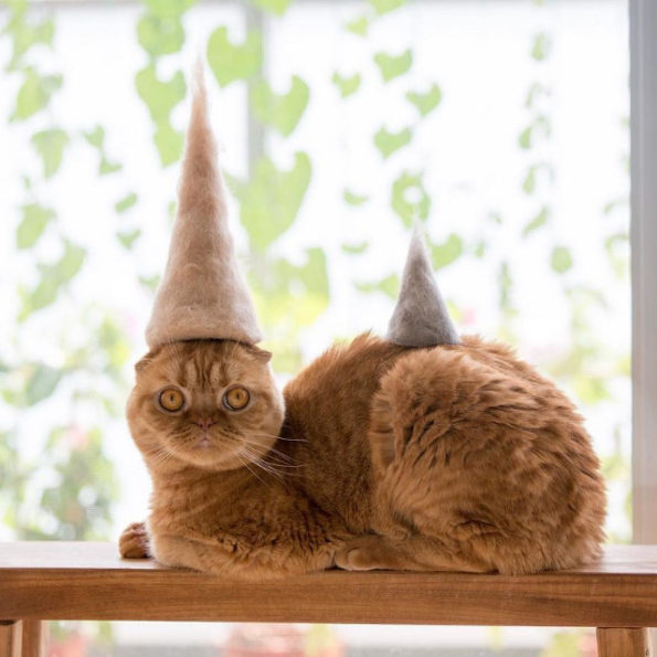 cats-wearing-cat-hats-12