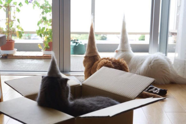 cats-wearing-cat-hats-2