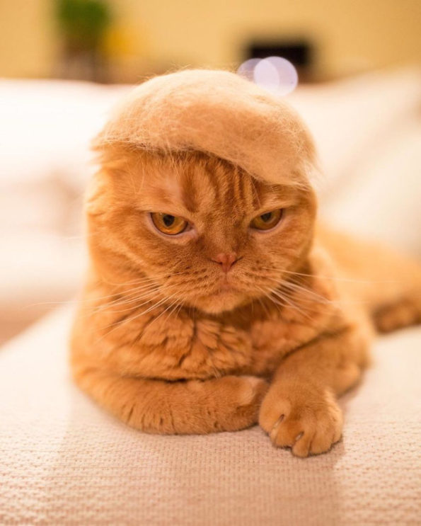 cats-wearing-cat-hats-3