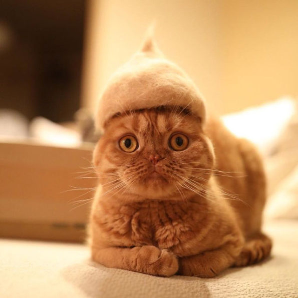 cats-wearing-cat-hats-4
