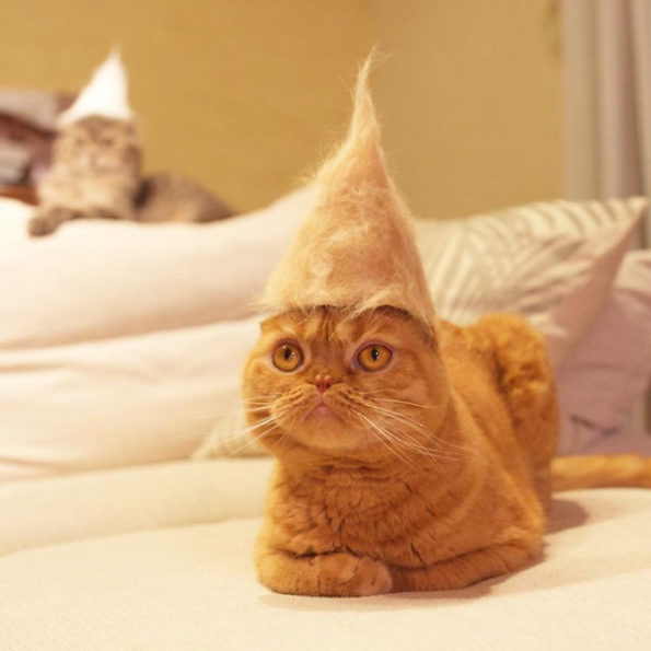 cats-wearing-cat-hats-5