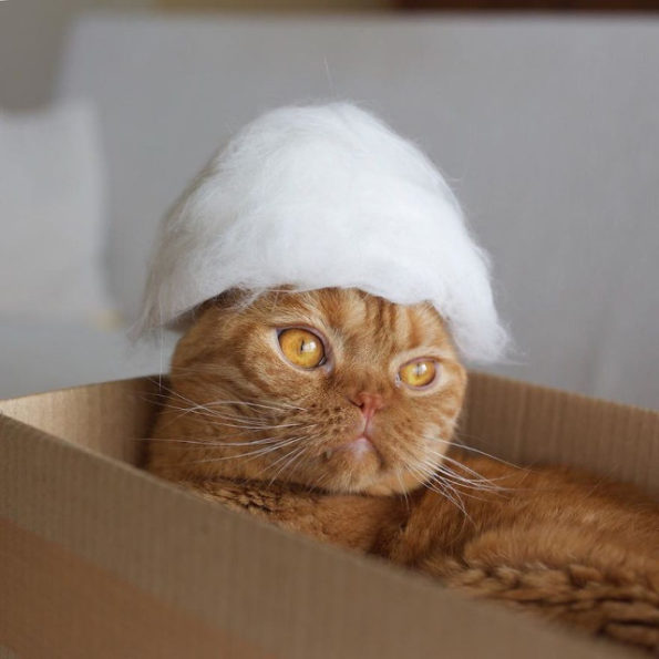 cats-wearing-cat-hats-8